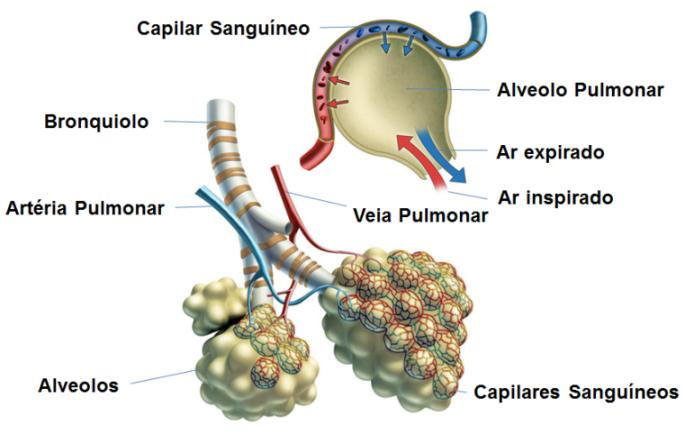 PCR - EERP/USP